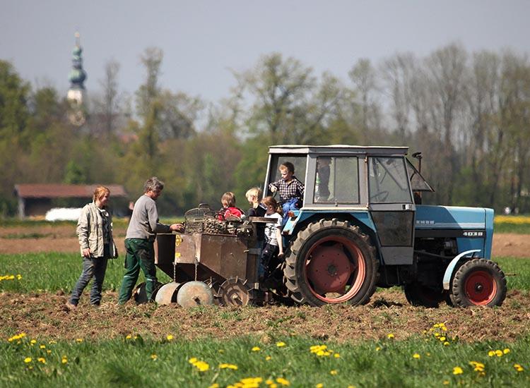 Kartoffel_Landwirtschaft_750px